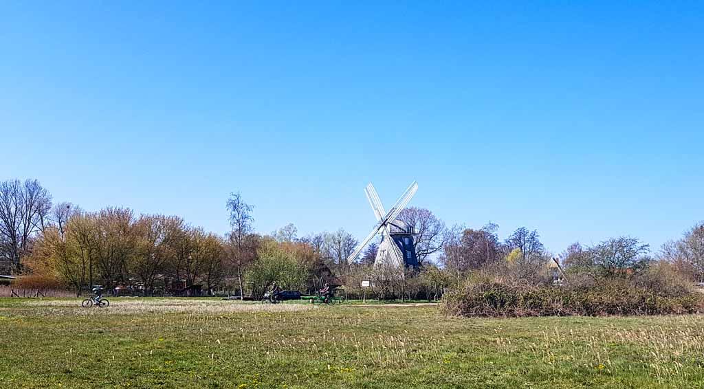 Blick über die Boddenwiesen auf die Mühle in Ahrenshoop (c) FRank Koebsch (2)