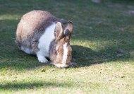 Kaninchen im Vogelpark Marlow (c) FRank Koebsch (1)