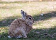 Kaninchen im Vogelpark Marlow (c) FRank Koebsch (2)