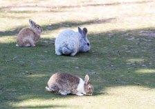 Kaninchen im Vogelpark Marlow (c) FRank Koebsch (3)