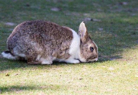 Kaninchen im Vogelpark Marlow (c) FRank Koebsch (4)