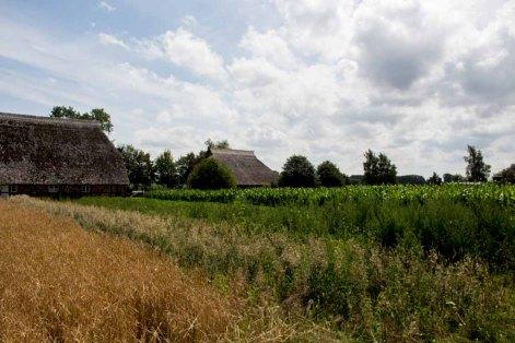 Blick über die Felder im Freilichtmuseum Klokenhagen (c) FRank Koebsch