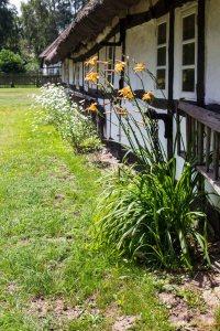 Blumen am Bauernhaus Klockenhagen im Freilichtmuseum KLockenhagen (c) Frank Koebsch (1)
