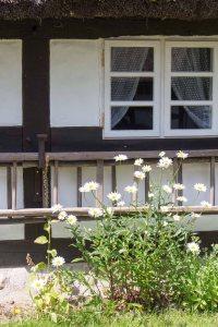 Blumen am Bauernhaus Klockenhagen im Freilichtmuseum KLockenhagen (c) Frank Koebsch (2)