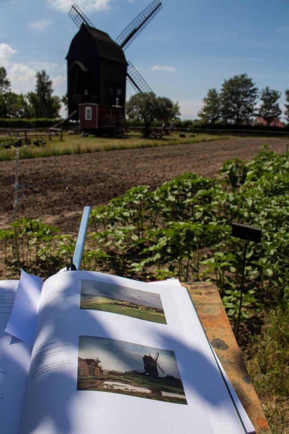 Schau`n wir mal wie Carl Malchin Bockwindmühlen gemalt hat (c) FRank Koebsch (3)