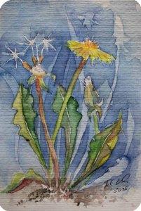 Wieder einmal Löwenzahn (c) Miniatur als Aquarell von FRank Koebsch
