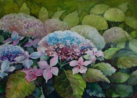 Farbspiel der Hortensien © Aquarell von Frank Koebsch