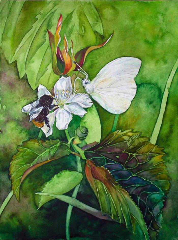 Schmetterling und Hummel auf einer Brombeerblüte (c) Aquarell von FRank Koebsch