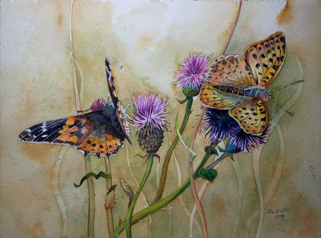 Schmetterlinge naschen von den Distelblüten (c) Aquarell von Frank Koebsch