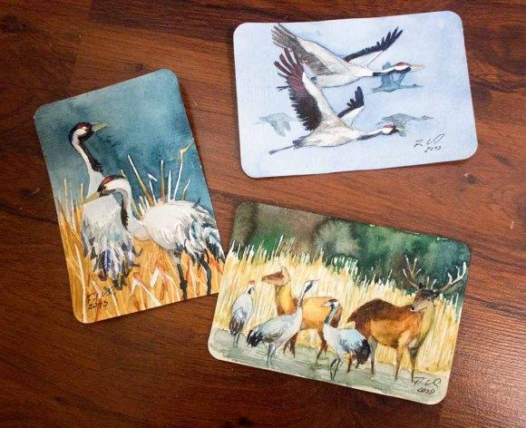 Drei Kranich Aquarelle auf Aquarellpostkarten von Hahnemühle (c) Frank Koebsch