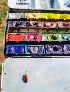Eine Feuerwanze als Farbtupfer auf meinem Aquarellkasten (c) Frank Koebsch