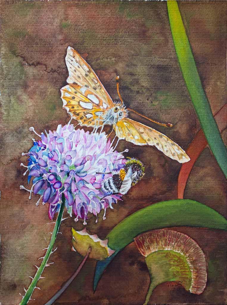 Schmetterling und Hummel auf der Blüte einer Acker-Witwenblume (c) Aquarell von FRank Koebsch