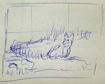 Überlegungen für den Bildaufbau - mit einem Fuchs an seinem Bau auf den Recknitzwiesen (c) FRank Koebsch