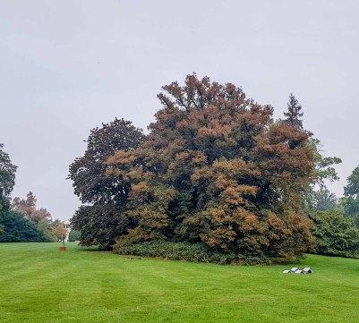 Herbst im Schloßpark Putbus (c) FRank Koebsch (2)