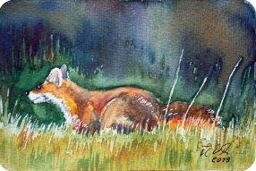 Rotfuchs auf der Pirsch (c) Miniatur in Aquarell von Frank Koebsch