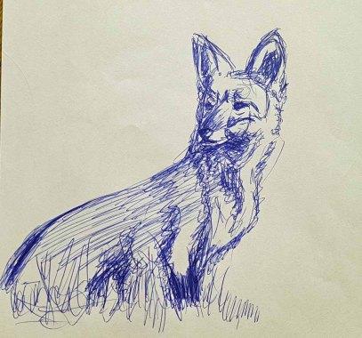 Skizze eines Rotfuchses (c) FRank Koebsch