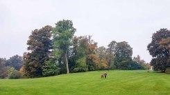 Spaziergänger im Schloßpark Putbus (c) Frank Koebsch (2)