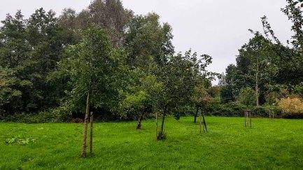 Streuobstwiese im Park hinter dem Kunstmuseum Schwaan (c) Frank Koebsch (1)