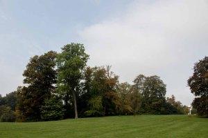 Wiese mit Blick auf die Orangerie im Schloßpark (c) Frank Koebsch (1)