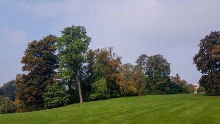 Wiese mit Blick auf die Orangerie im Schloßpark (c) Frank Koebsch (2)