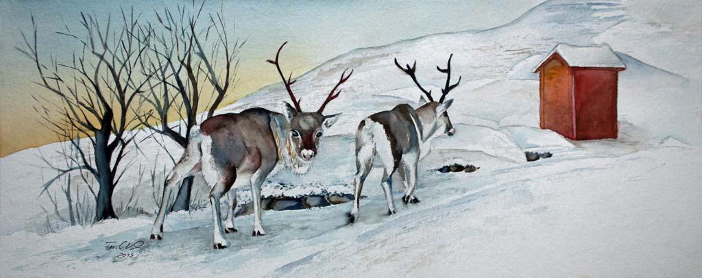 Rentiere im norwegischen Winter (c) Aquarell von Frank Koebsch k