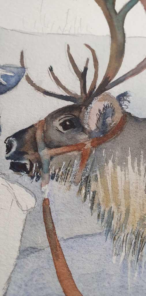Ren - Ausschnitt aus dem Aquarell - Sami mit ihren Rentieren im norwegischen Winter (c) Frank Koebsch