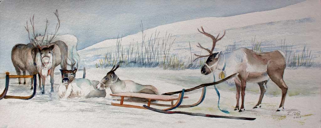 Rentiere der Sami im Winter © Aquarell von Frank Koebsch