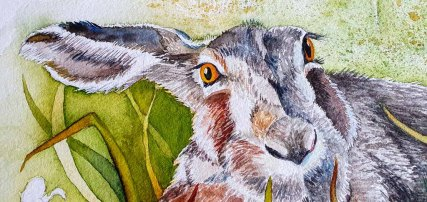 Ein Aquarell mit einem Hasen entsteht - der treue Blick eines Hasen (c) Frank Koebsch
