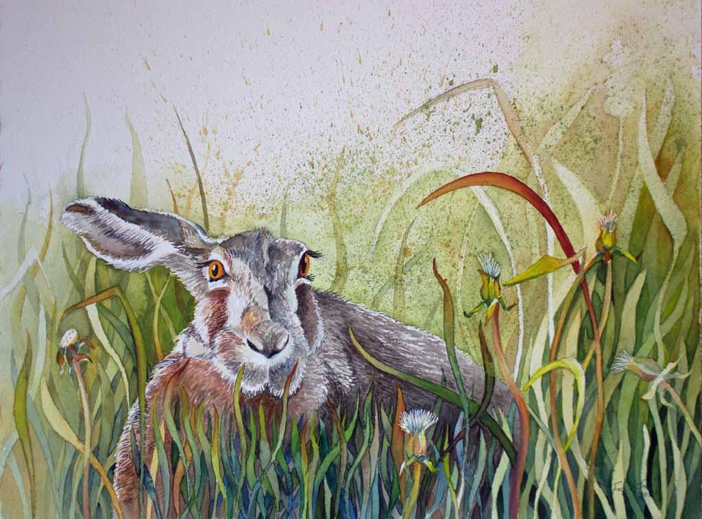 Ein Hase versteckt im Gras (c) Aquarell von Frank Koebsch