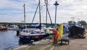 Ein Fischer sortiert nach den Schäden durch Robben die kaputten Netze im Hafen Thiessow (c) Frank Koebsch (1)
