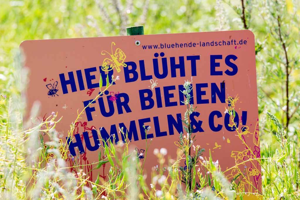 Hier blüht es für Bienen, Hummeln & Co © Frank Koebsch