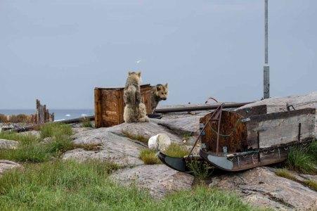 Schlittenhunde in Ilimanaq an der Diskobucht (c) Frank Koebsch (1)