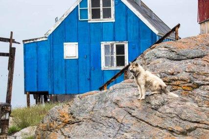 Schlittenhunde in Ilimanaq an der Diskobucht (c) Frank Koebsch (2)
