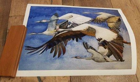 Druck auf Hahnemühlepapier - Albrecht Dürer im Format 24 x 32 cm vom Kranich Aquarell – Formationsflug (c) FRank Koebsch