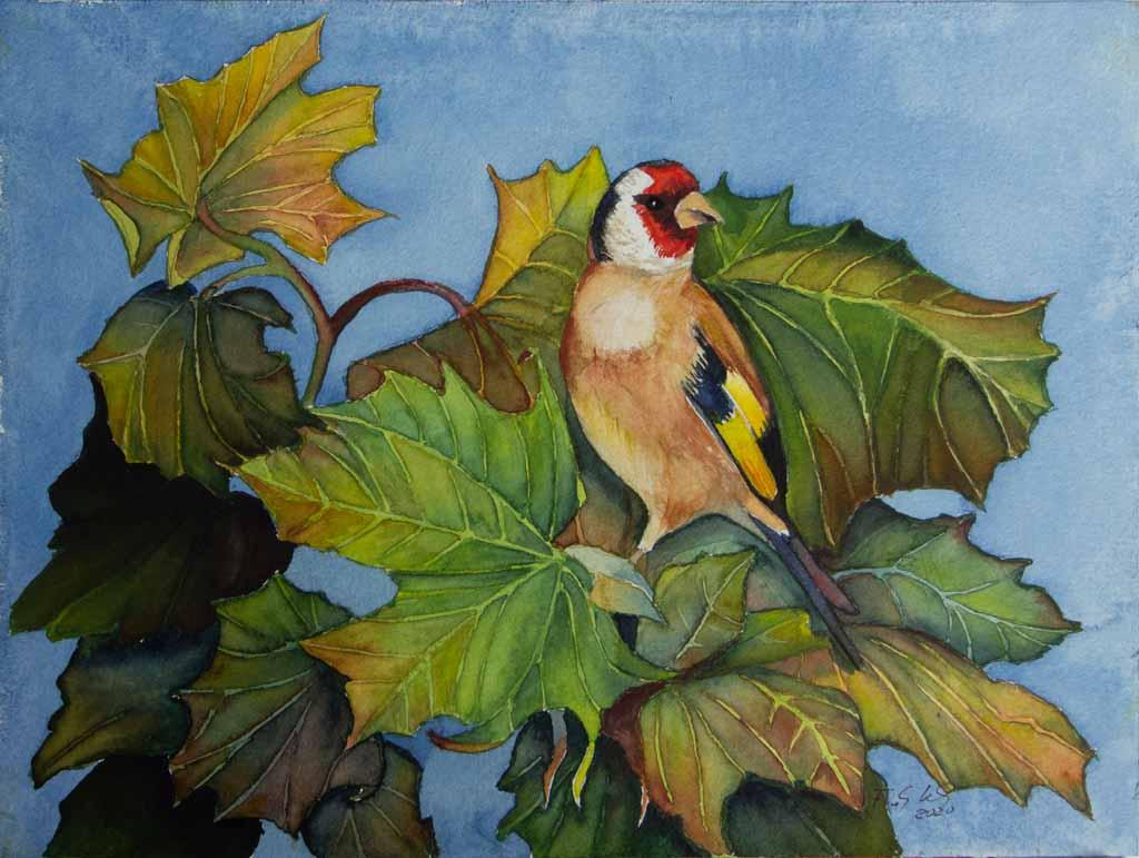 Versteckspiel mit einem Stieglitz (c) ein wild life Aquarell von Frank Koebsch