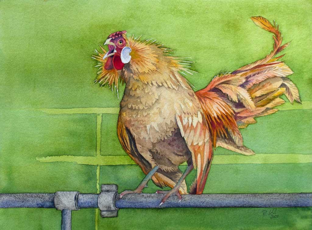 Wenn der Hahn kräht ... (c) Aquarell von Frank Koebsch