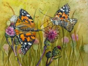 Distelfalter (c) ein Schmetterlingsaquarell von Frank Koebsch