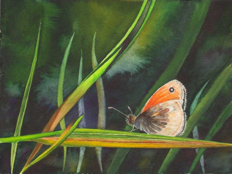 Farbtupfer in der Wiese © ein Schmetterlingsaquarell mit einem Kleinen Wiesenvögelchen von Frank Koebsch