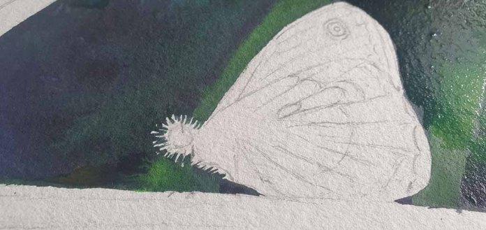Mehrere Lasuren ergeben die notwendige Dunkelheit in der Tiefe der Wiese und garantieren das Leuchten des Schmetterlings © Frank Koebsch (3)