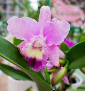 Farbspiel der Orchideen bei Grönfingers (c) Frank Koebsch (3)