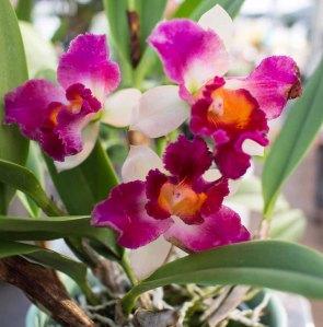 Farbspiel der Orchideen bei Grönfingers (c) Frank Koebsch (5)