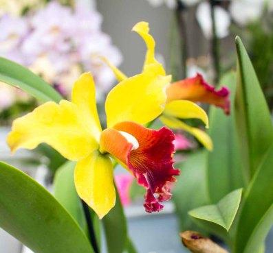 Farbspiel der Orchideen bei Grönfingers (c) Frank Koebsch (7)