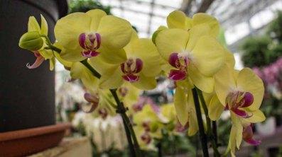 Farbspiel der Orchideen bei Grönfingers (c) Frank Koebsch (8)
