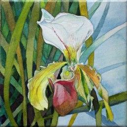 Frauenschuh (c) ein Orchideen Aquarell auf Leinwand von FRank Koebsch