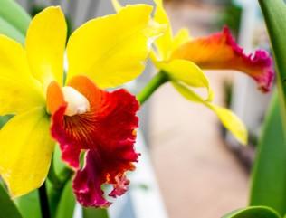 Orchideen bei Grönfingers (c) Frank Koebsch (4.1)