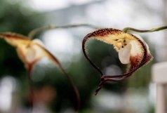 Orchideen bei Grönfingers (c) Frank Koebsch (5)