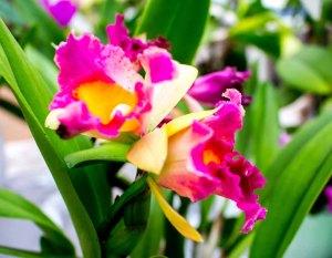 Orchideen bei Grönfingers (c) Frank Koebsch (6)