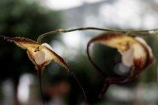 Orchideen bei Grönfingers (c) Frank Koebsch (7)