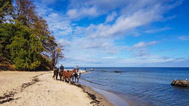 Pferde am Südstrand von Sellin © Frank Koebsch (1)