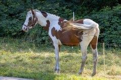 Pferde auf den Wiesen an der Recknitz (c) Frank Koebsch (3)